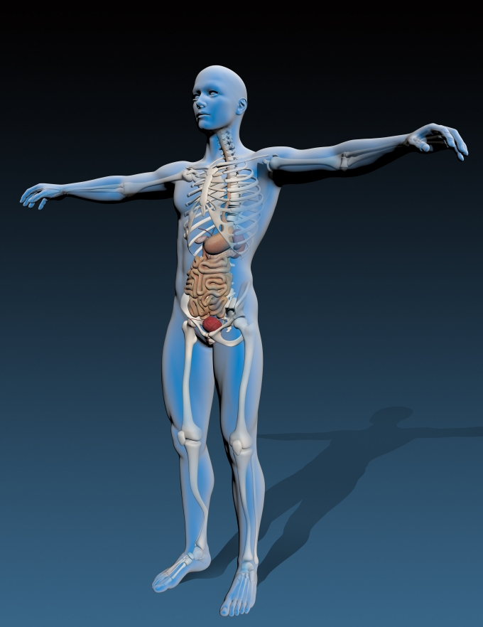 human-body-with-internal-organs_f1X8bOd_.jpg